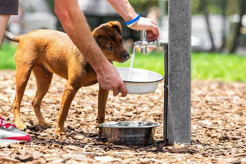 Summer pet safety can help to prevent heat stroke in pets