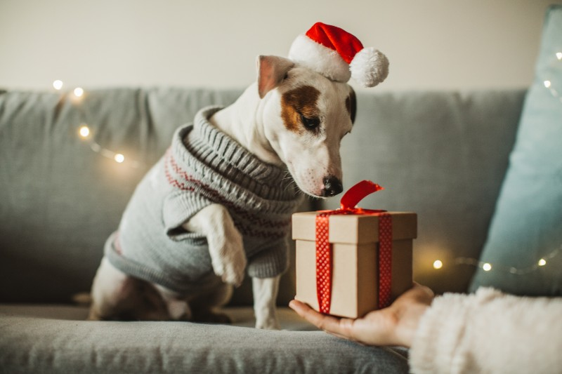 Holiday pet traditions can make holidays with pets fun!