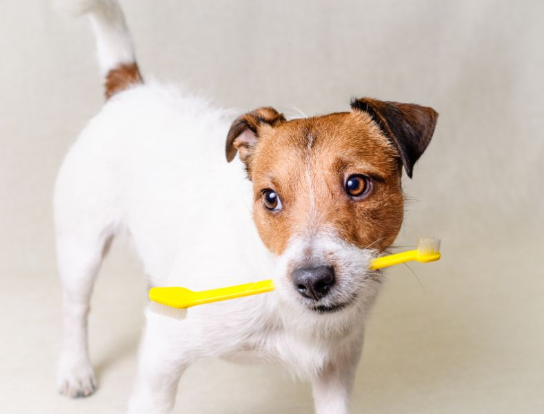 A dog holds a yellow toothbrush in its mouth.