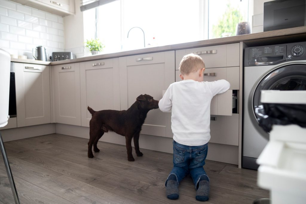 A boy and dog look in a kitchen drawer.