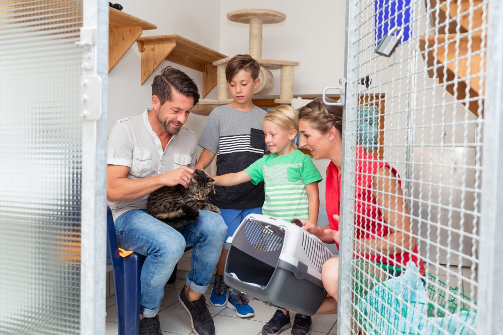 A family adopting a cat in New Jersey.