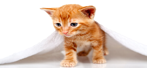 how to take care of a runt kitten